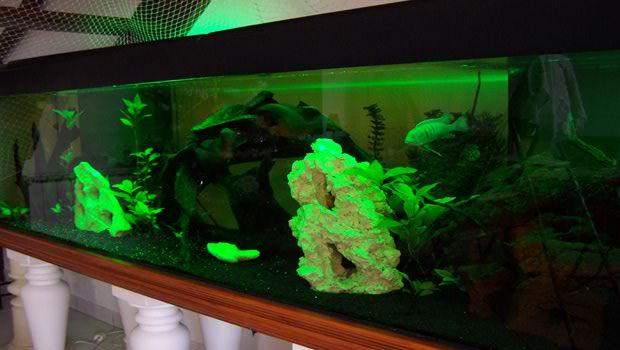 Idee Deco Aquarium deco led eclairage : idées déco pour les aquariums